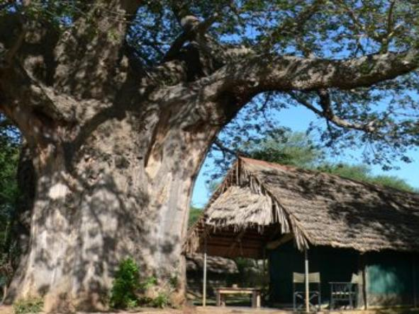 Tarangire Safari Lodge - Accommodation